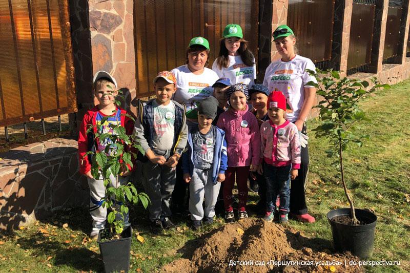 Готовы-посадить-дерево