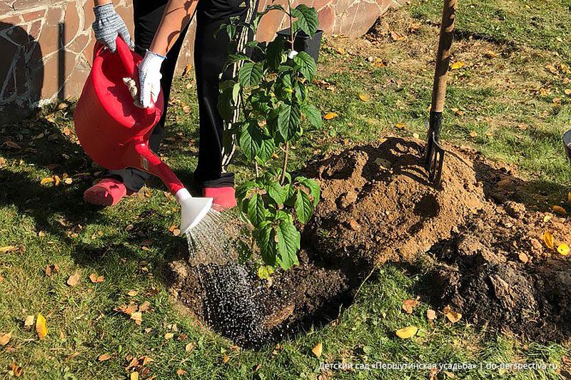 Посадили-дерево